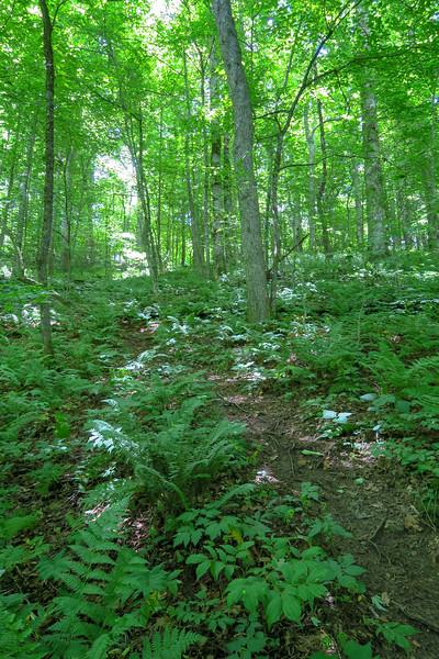 Buckeye Gap Trail -- 4,700'