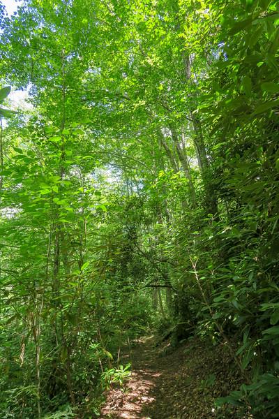 Haywood Gap Trail -- 3,960'