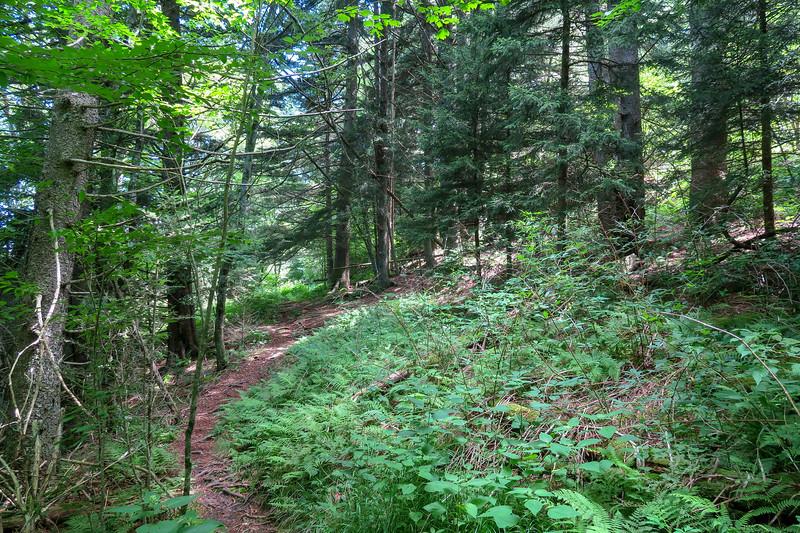 Buckeye Gap Trail -- 5,490'