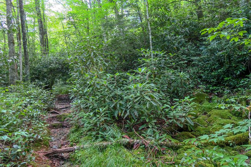Haywood Gap Trail -- 4,320'