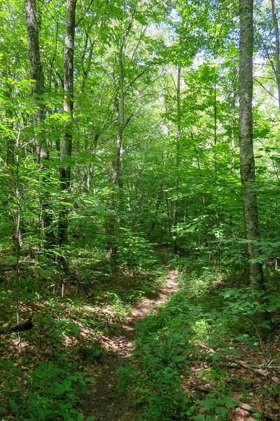 Buckeye Gap Trail -- 5,020'