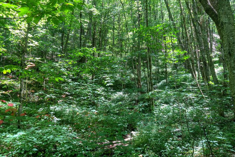 Haywood Gap Trail -- 3,880'
