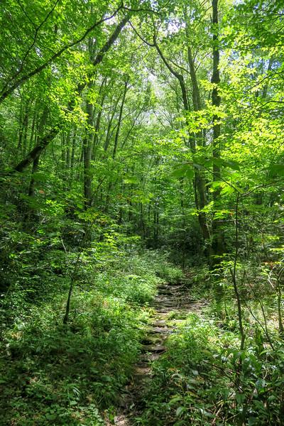 Haywood Gap Trail -- 4,290'