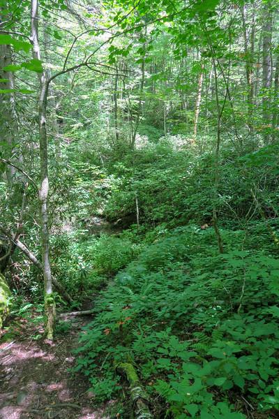 Buckeye Gap Trail -- 4,560'
