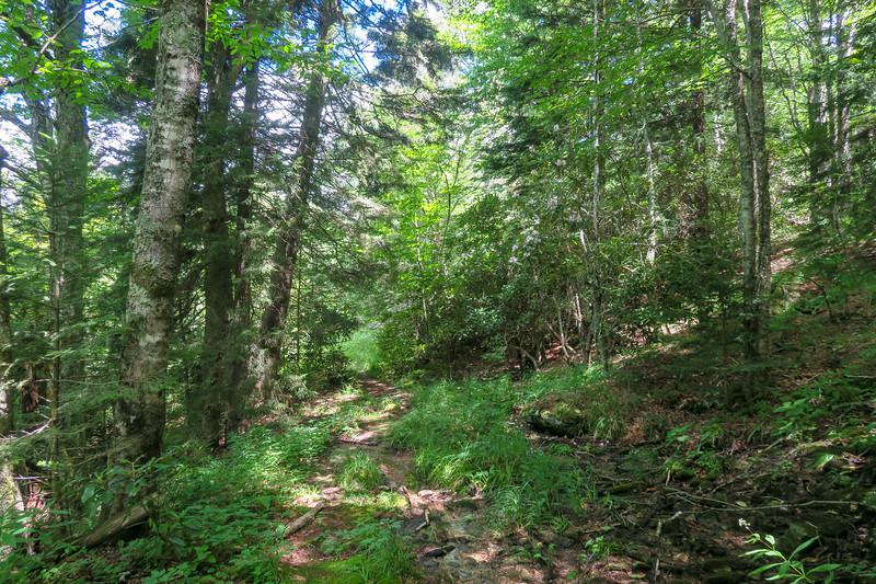 Buckeye Gap Trail -- 5,300'
