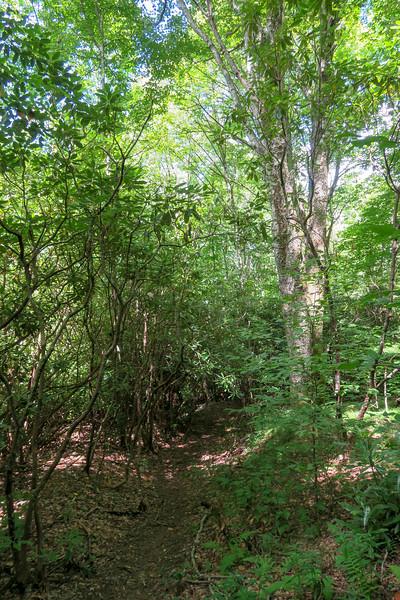 Buckeye Gap Trail -- 5,120'