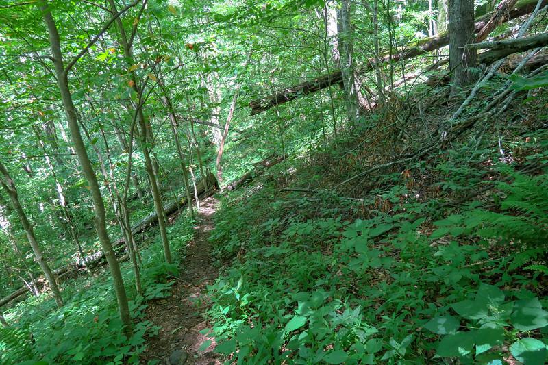 Buckeye Gap Trail -- 4,200'
