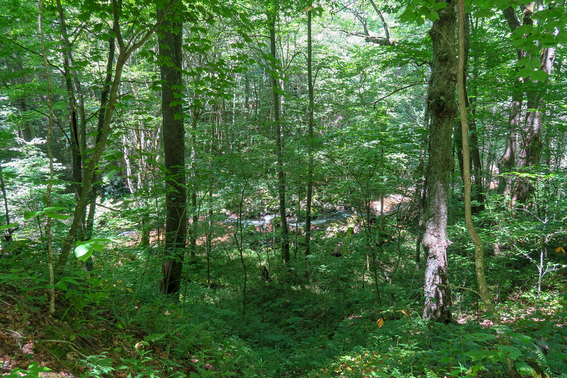 Haywood Gap Trail -- 4,120'