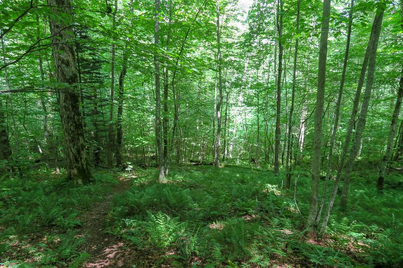 Buckeye Gap Trail -- 4,650'
