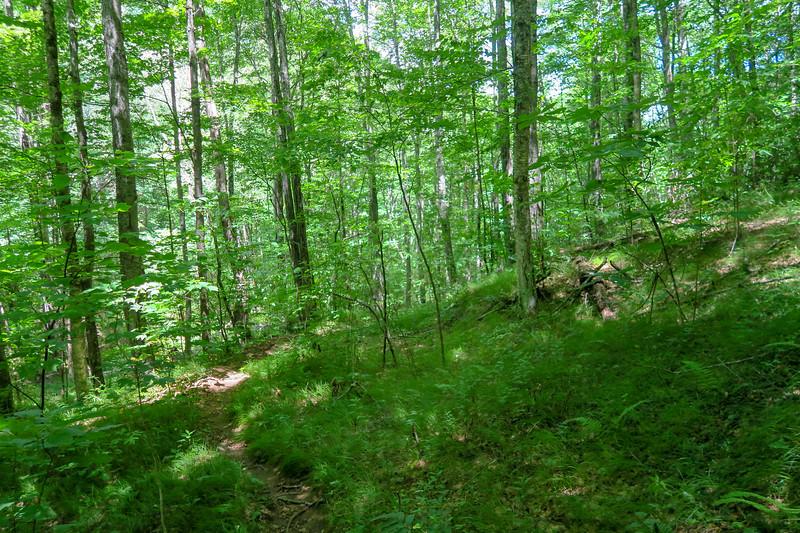 Buckeye Gap Trail -- 4,100'