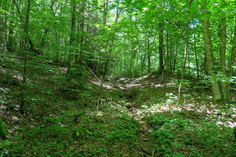 Haywood Gap Trail -- 4,080'