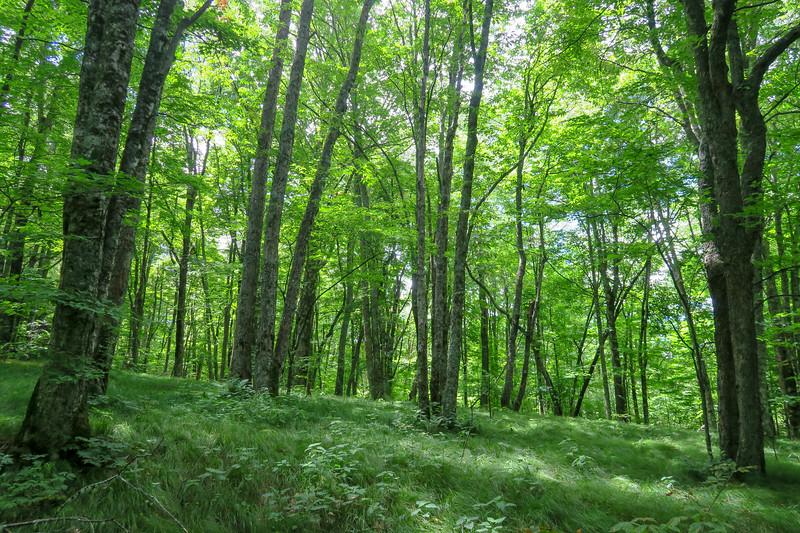 Buckeye Gap Trail -- 4,930'