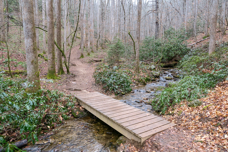 Moore Cove Trail -- 2,560'