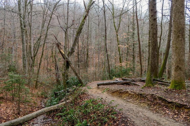 Moore Cove Trail -- 2,530'