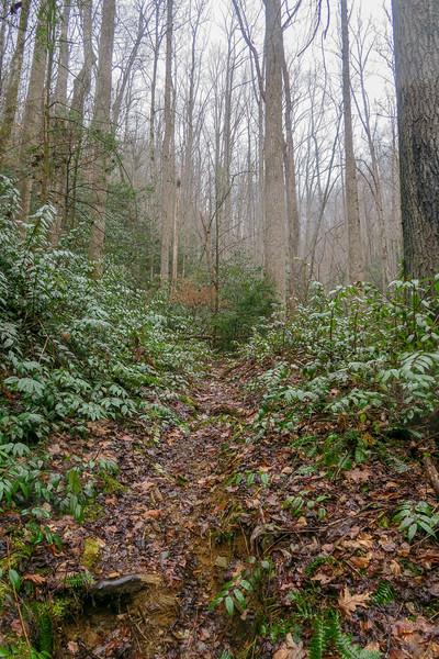 Unnamed Falls Path -- 2,590'