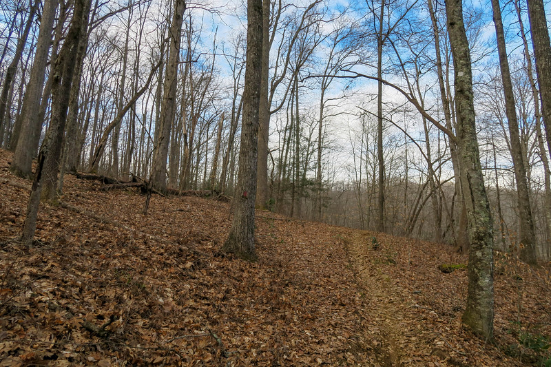 Bennett Gap Trail -- 2,820'