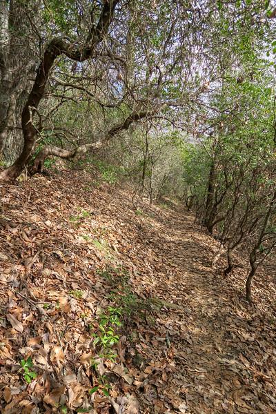 Bennett Gap Trail -- 3,420'