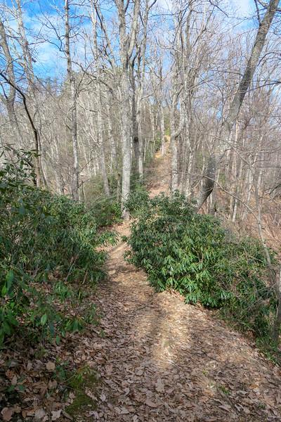 Bennett Gap Trail -- 3,380'