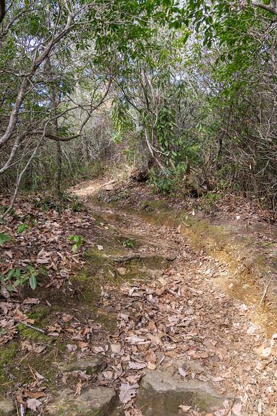 Bennett Gap Trail -- 3,400'
