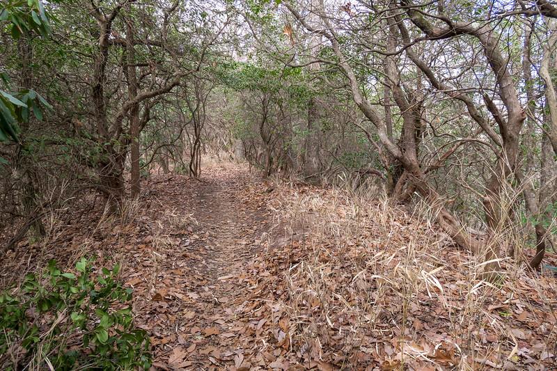 Bennett Gap/Coontree Loop Trail -- 3,320'