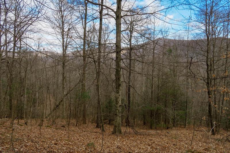 Bennett Gap Trail -- 2,650'