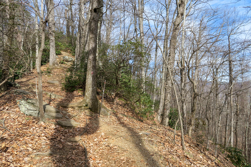 Bennett Gap-Perry Cove Trail Junction (Saddle Gap) -- 3,350'