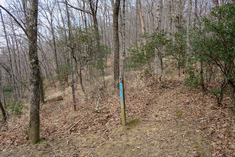 Bennett Gap/Coontree Loop Trail North Junction -- 3,300'