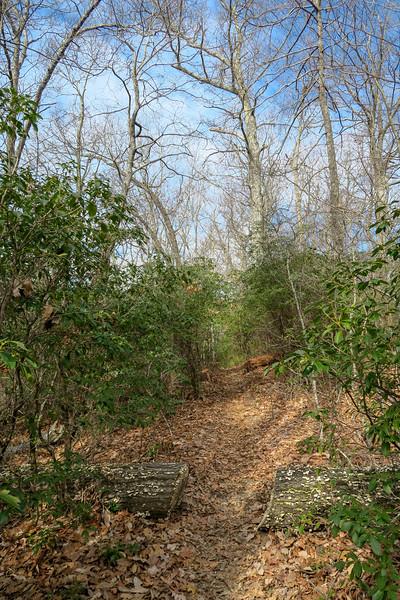 Bennett Gap/Coontree Loop Trail -- 3,300'