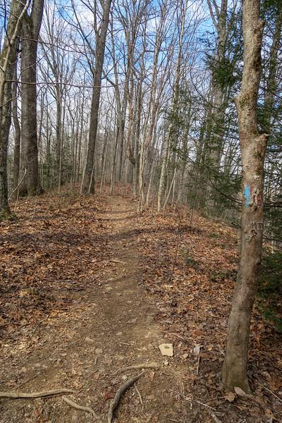 Bennett Gap/Coontree Loop Trail -- 2,980'