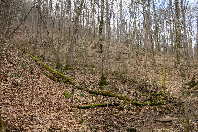 Bennett Gap Trail -- 2,600'