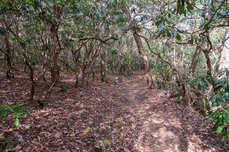Bennett Gap Trail -- 3,450'