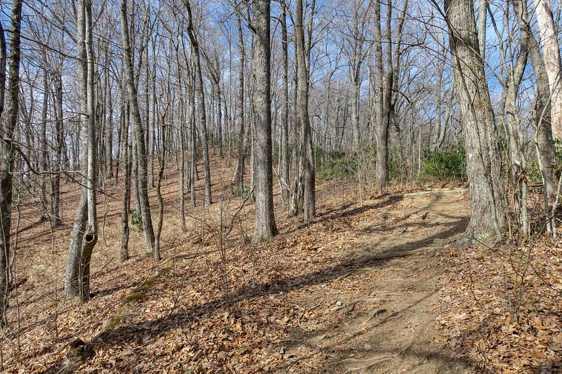 Bennett Gap/Coontree Loop Trail -- 3,150'