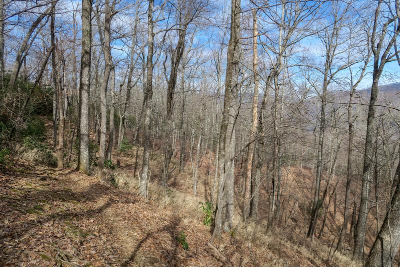 Bennett Gap Trail -- 3,440'