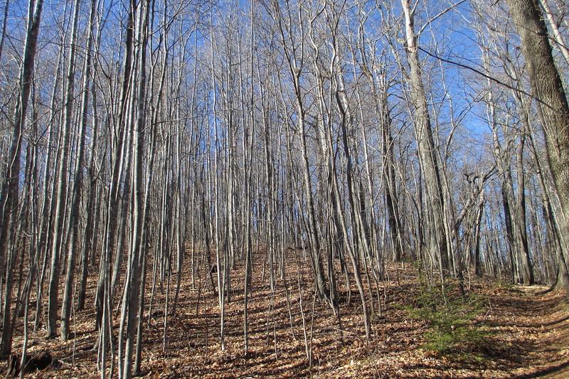 Art Loeb Trail - 3,750'