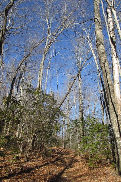 Art Loeb Trail - 3,280'