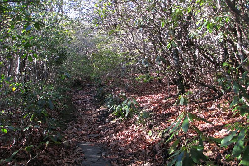 Art Loeb Trail - 4,500'