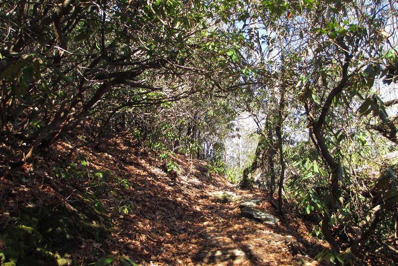 Art Loeb Trail - 3,300'