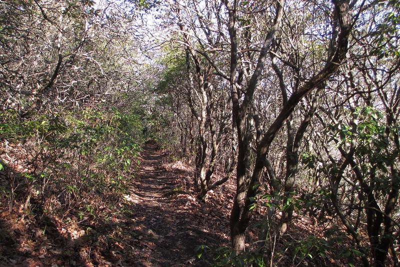 Art Loeb Trail - 4,520'