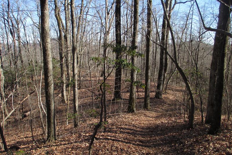 Art Loeb Trail - 3,550'