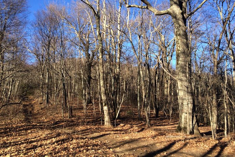 Art Loeb Trail - Deep Gap - 4,550'