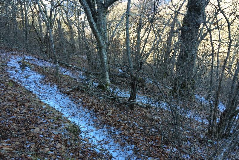 Art Loeb Trail - 4,900'