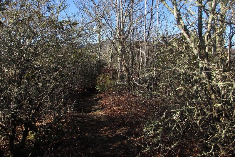 Art Loeb Trail - 5,100'
