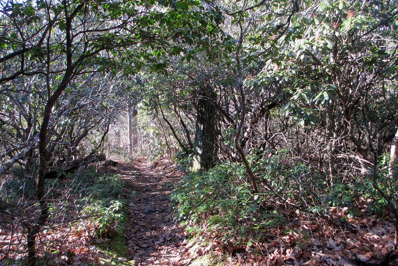Art Loeb Trail - 4,610'