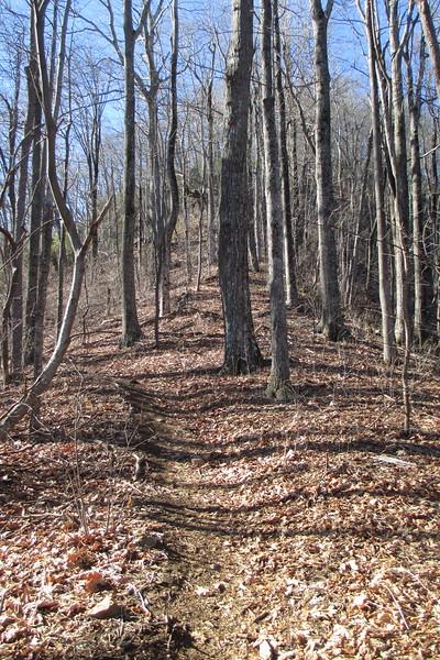Art Loeb Trail - 4,000'