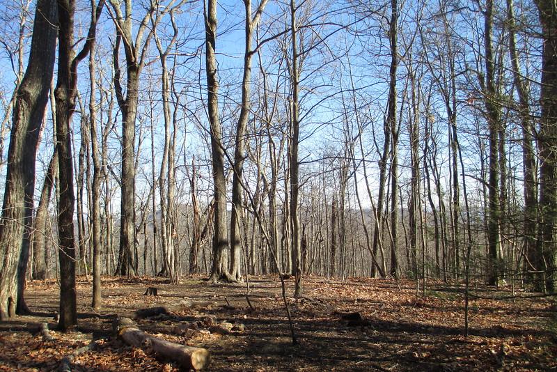 Art Loeb Trail - 3,900'