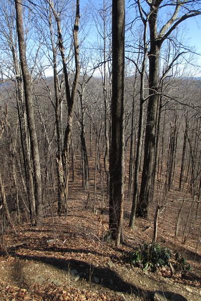 Art Loeb Trail - 4,100'