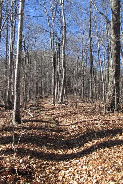 Art Loeb Trail - 3,850'
