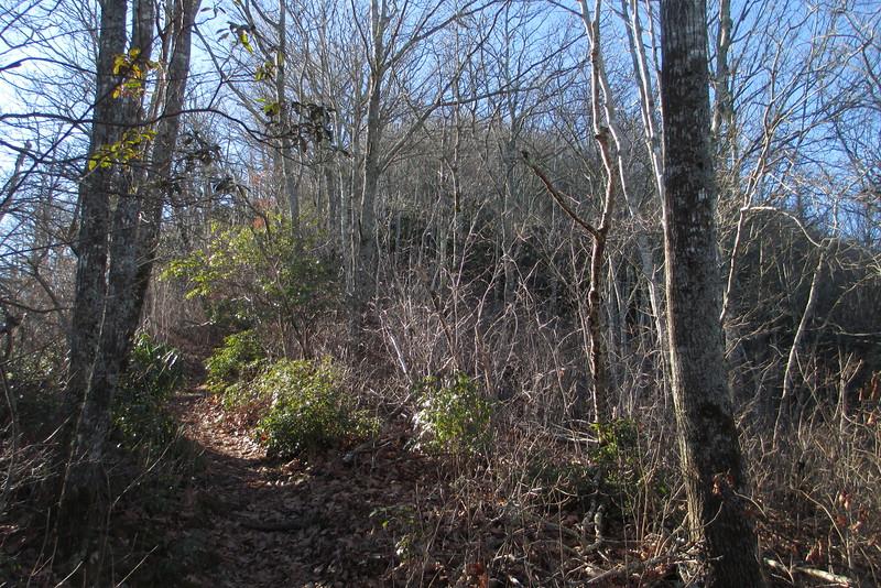 Art Loeb Trail - 5,050'