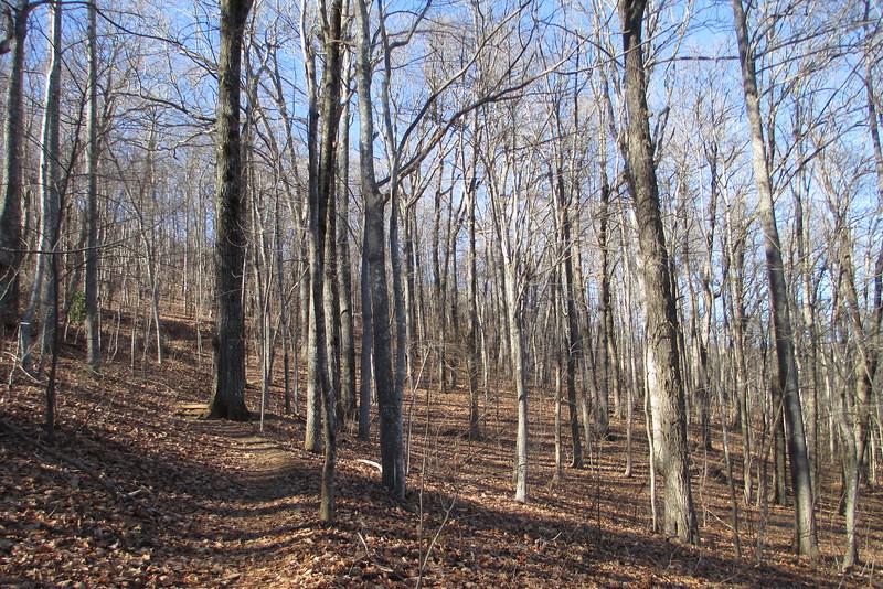 Art Loeb Trail - 3,700'