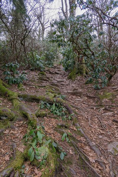 Pilot Rock Trail -- 5,100'